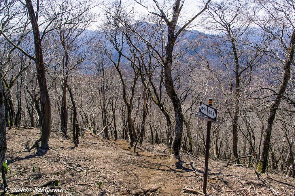 下山時注意が必要な治田峠への分岐