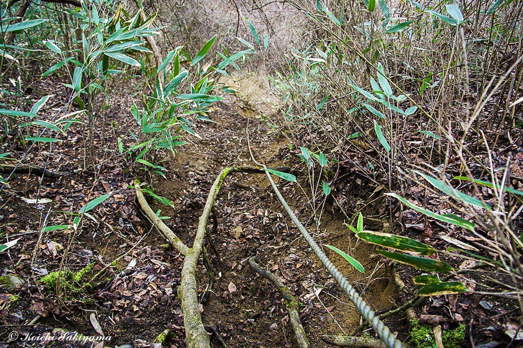 急勾配で滑りやすい土壌