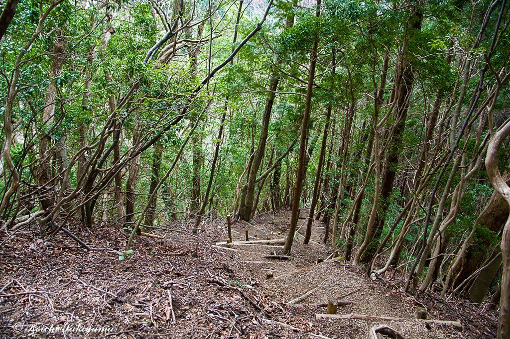 六地蔵尾根から松の木道…ここは釜谷道との分岐