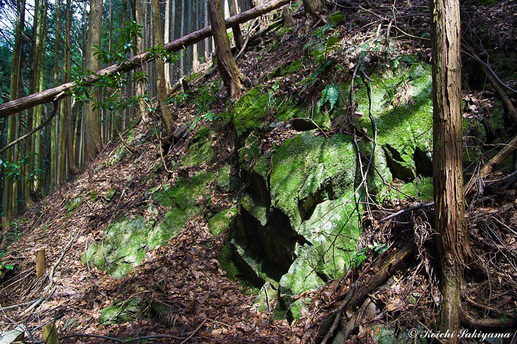 ツツジ尾谷は湿潤で岩肌にも苔がついています